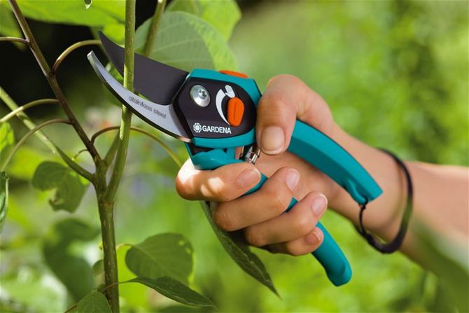 Без секатора практически невозможно привести сад в порядок, даже если он совсем маленький