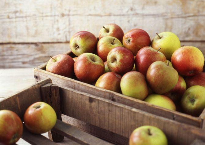 Базовые правила хранения яблок