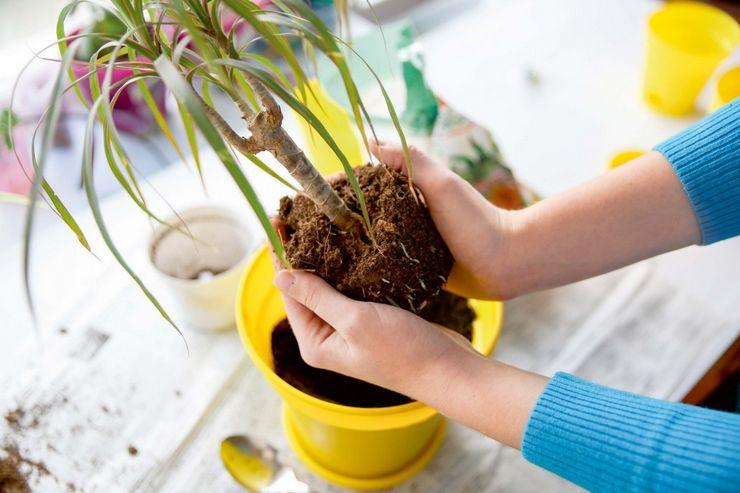 Осмотр корней растения