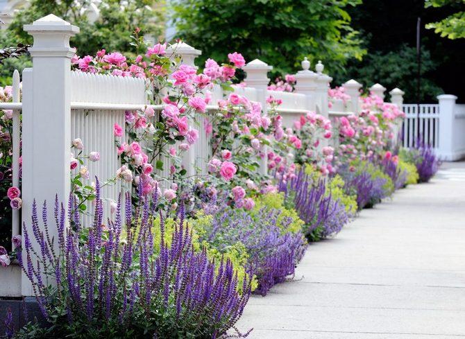 Применение роз Паризе Шарм в ландшафтном дизайне