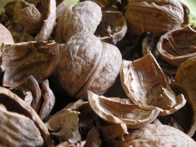 Мульча, состоящая из шелухи тыквенных семечек, арахисовых стручков и скорлупы орехов – это отличное органическое удобрение для овощных грядок.