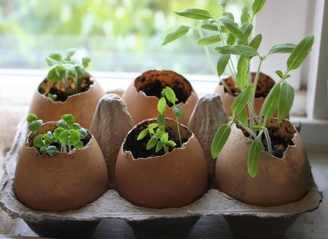 Роль емкости для выращивания рассады и посадки семян могут выполнять различные бытовые отходы, которые, на первый взгляд, абсолютно бесполезные