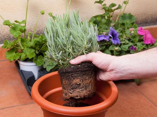 Меры по спасению залитых растений