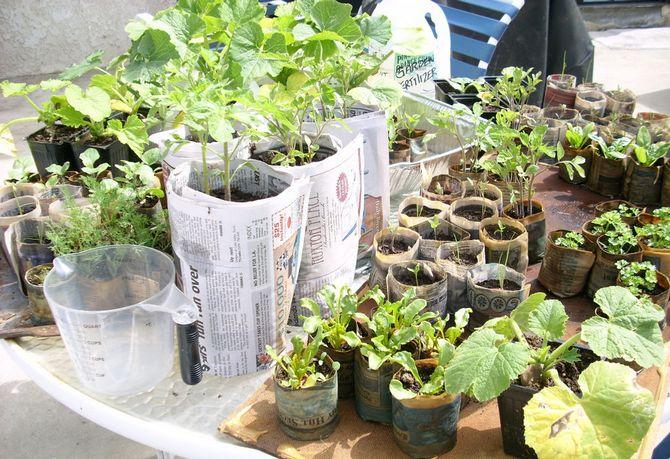 Под каждый вид рассады можно при помощи различных емкостей и газет соорудить стаканы разных размеров