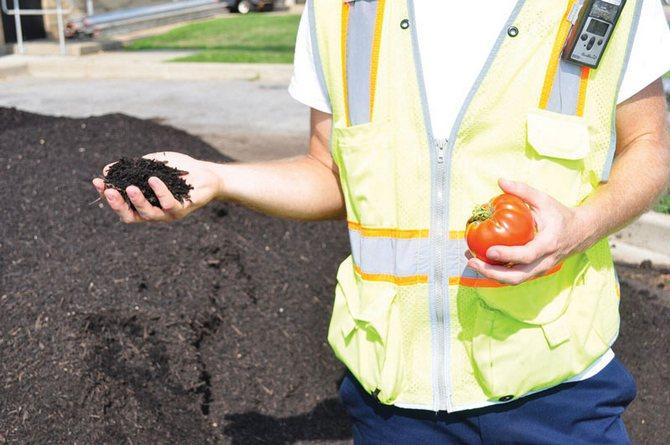 Подзимний посев помидоров на компост
