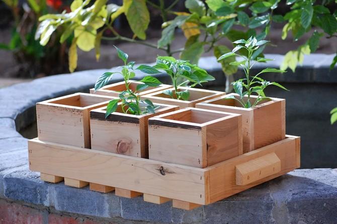 Высевание семян в ящике – это самый старый способ выращивания рассады