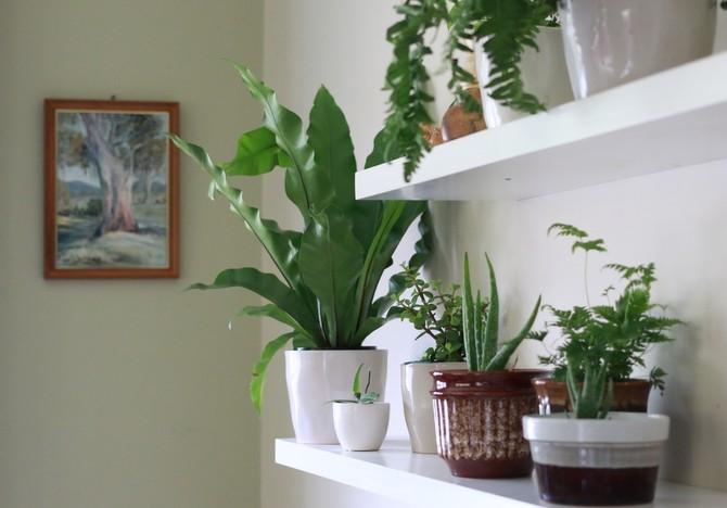 Лунный календарь для комнатных растений и цветов в марте