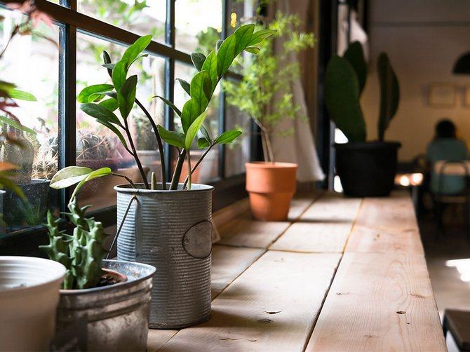 Лунный календарь для комнатных растений и цветов в октябре