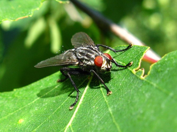 Уничтожаем личинки совки, майского жука, капустной мухи