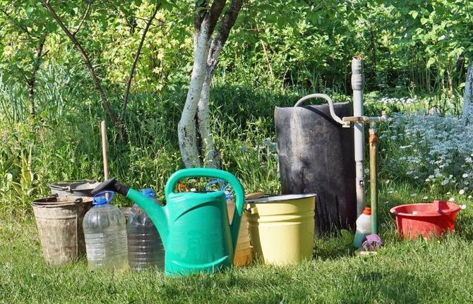 Народные рецепты для борьбы с вредителями на основе органики
