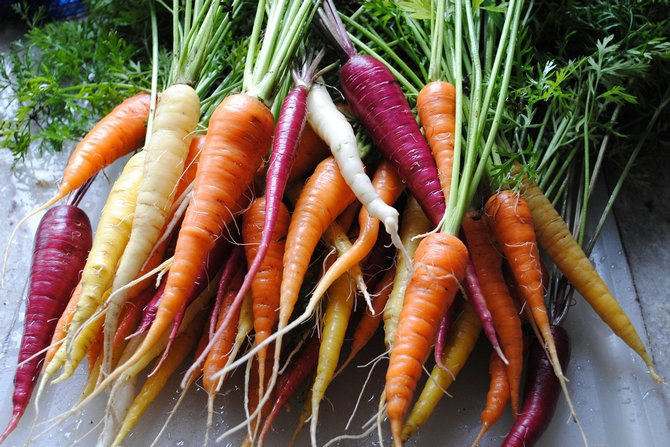 Основные сортотипы моркови