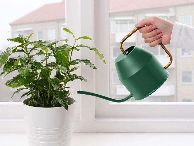 Нарушение режима полива растений