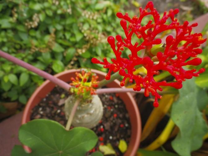 Сухость воздуха совершенно не вредит состоянию растения