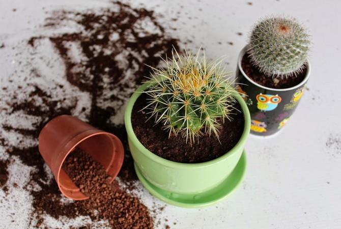 Почва представляет собой смесь из дерна, перегноя, торфа и песка в равном соотношении