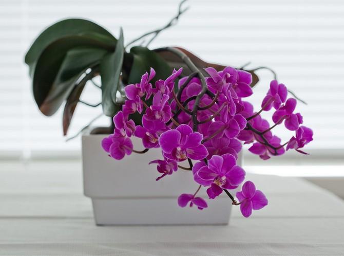 Орхидеи хорошо себя чувствуют под люминесцентным светом.