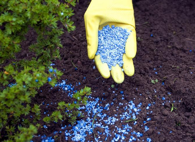Фосфорные удобрения для огородных культур
