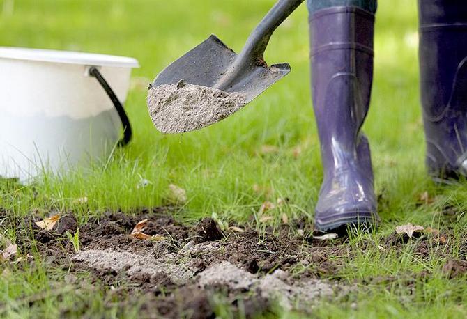 Это природное удобрение содержит в своем составе большое количество калия, бора, фосфора и марганца.
