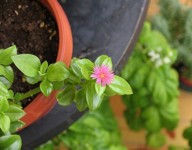 можно использовать готовые почвенные смеси для кактусов и суккулентов.