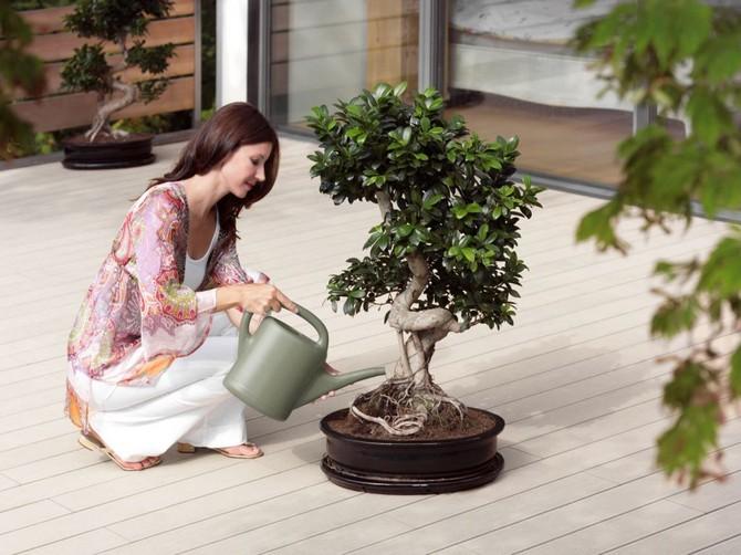 Искусство выращивания бонсай. Как вырастить дерево бонсай в домашних условиях