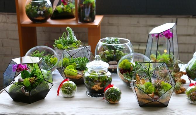 Чтобы создать флорариум, необходим стеклянный либо пластиковый контейнер.