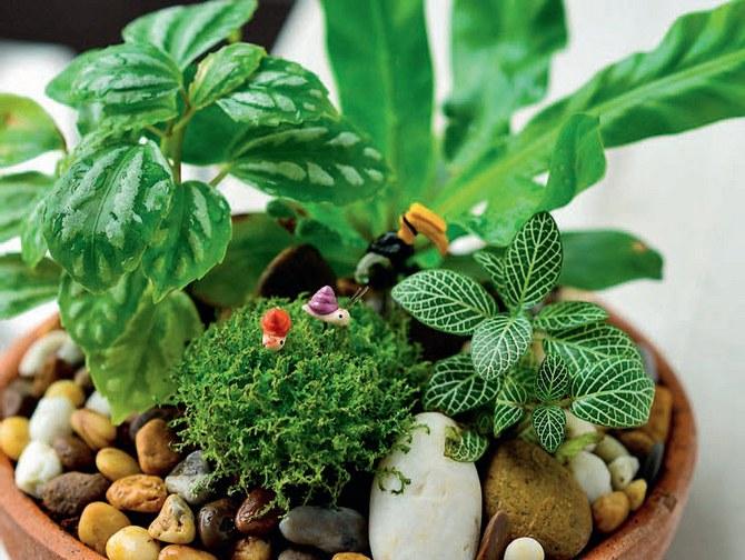 Этот вариант фитодизайна интерьеров представлен групповым размещением растений в невысоком контейнере.