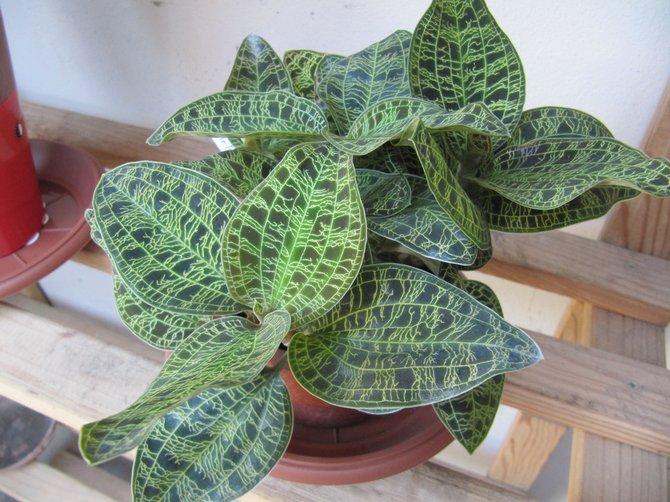 оптимальный уровень влажности воздуха для растения варьируется в пределах 80-90%