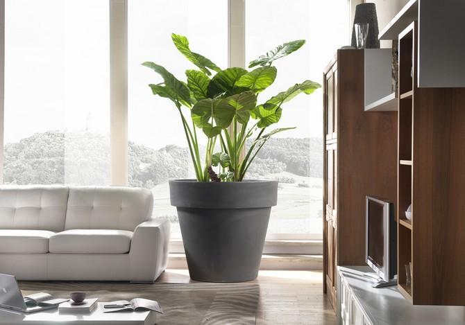 Счастливому хозяину просторного жилища следует приглянуться к отдельно располагающемуся растению-солитеру.