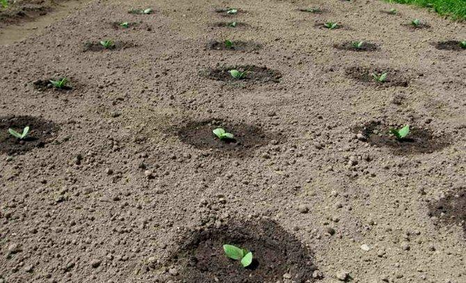 Посев в открытую почву