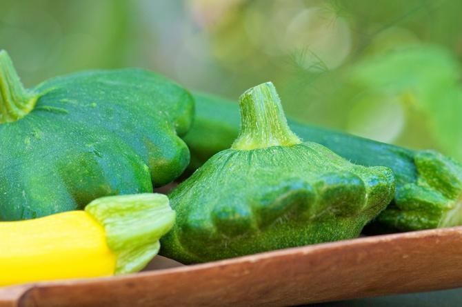 Патиссоны – выращивание и уход. Посадка патиссонов в открытый грунт и стаканчики