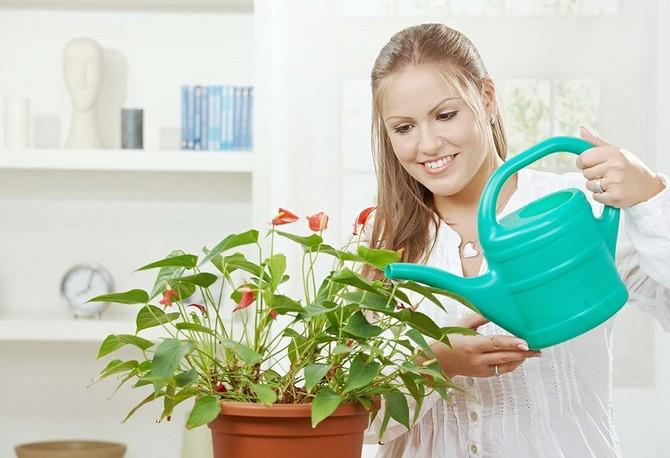 Растения чувствуют к себе отношение человека, поэтому так важно мысленно с ними общаться
