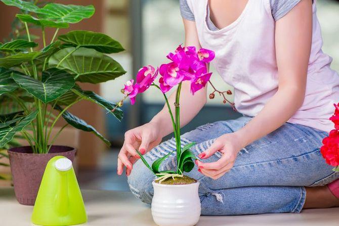 Что любят комнатные растения. Правильный уход и забота о цветах в доме