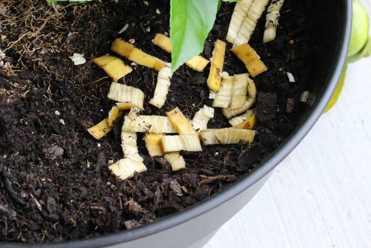 Банановая кожура для подкормки растений