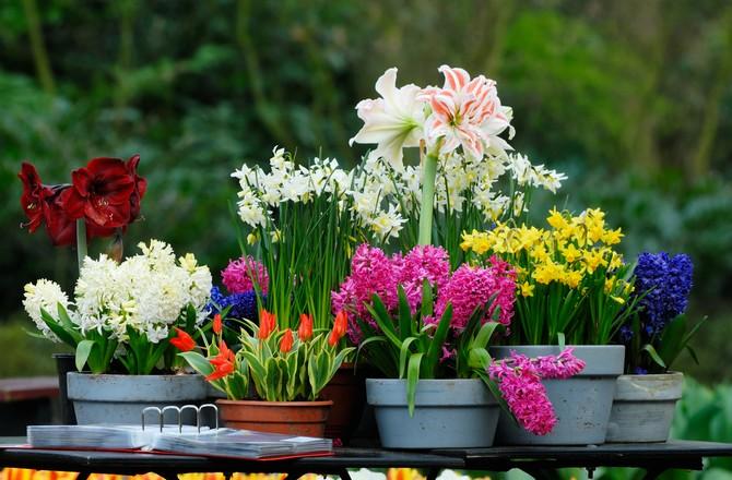 Как добиться цветения комнатных растений