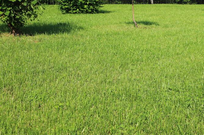Луговой газон