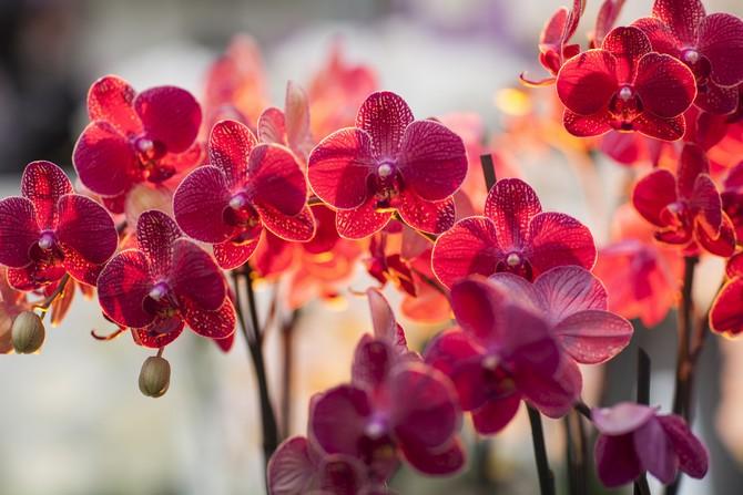 Орхидея питается энергетикой человека в ночное и предрассветное время.