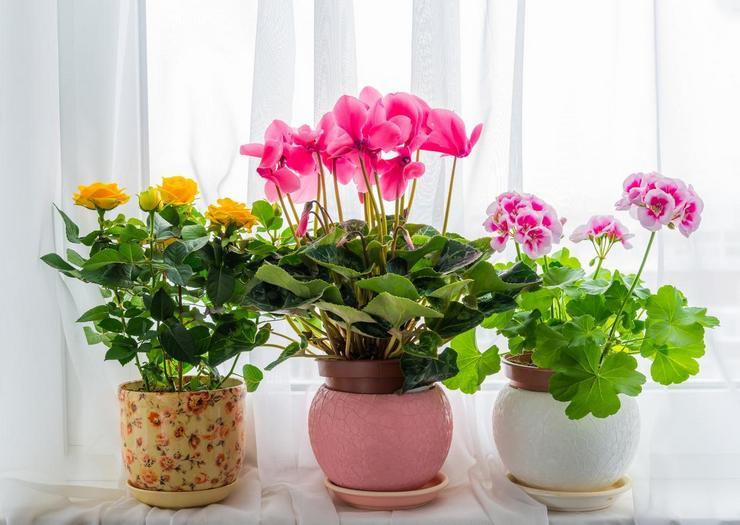 Особенности цветения растений
