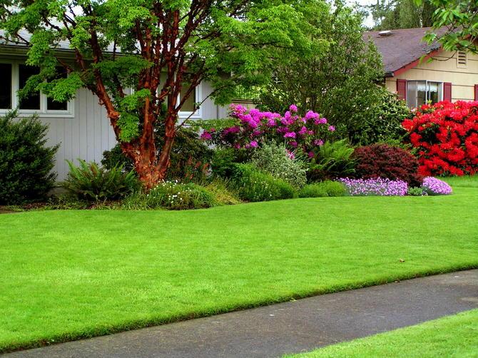 Партерный газон