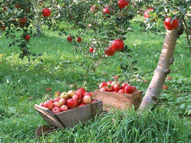Прививка плодовых деревьев весной: лучшие способы