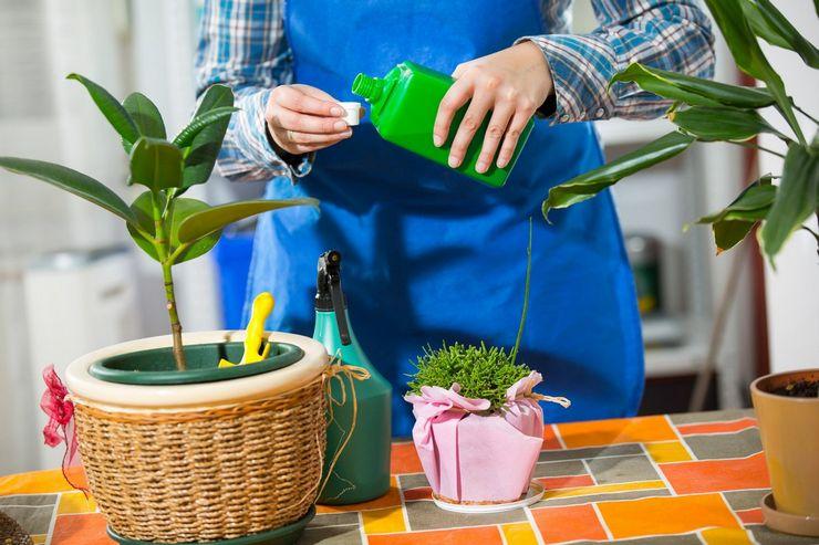 Как и чем стимулировать цветение растений