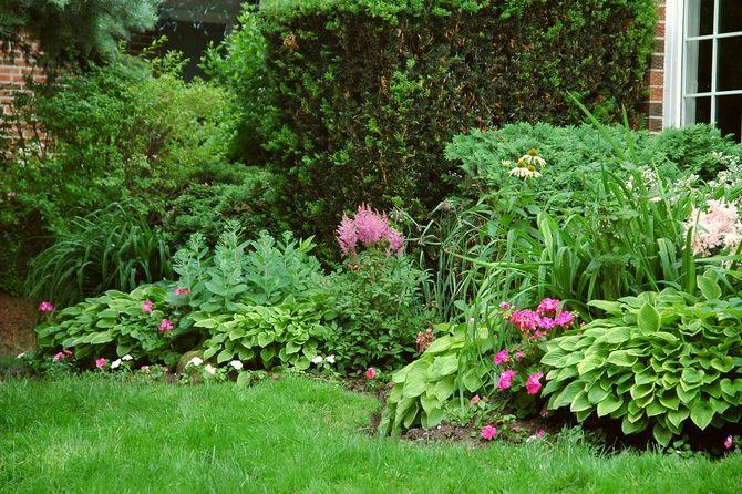 Какие тенелюбивые многолетние растения и цветы выбрать для сада. Описание, фото