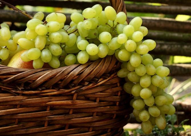 Описание винограда Кеша