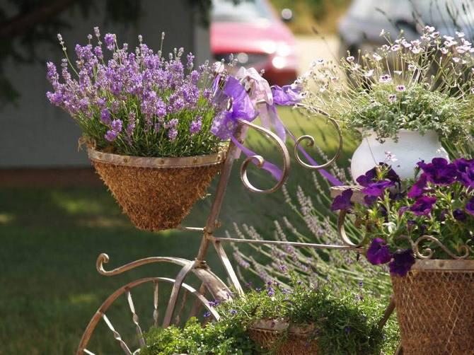Расслабляющий аромат лаванды используют на сеансах ароматерапии.