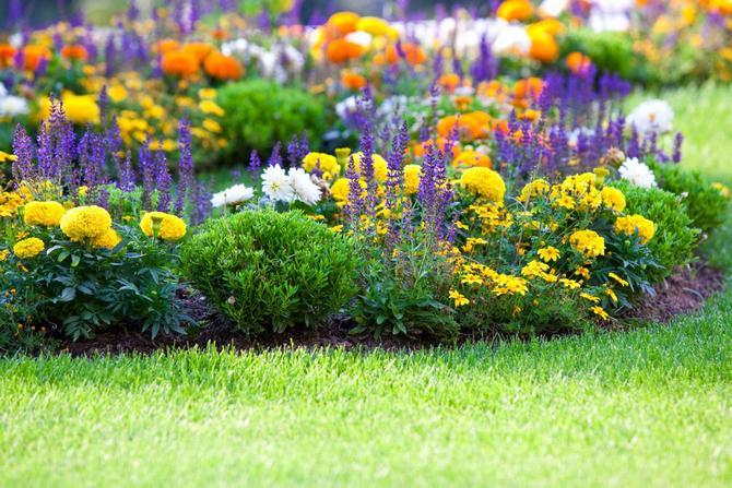 Наиболее популярные многолетние растения, способные перенести зимние холода в открытом грунте