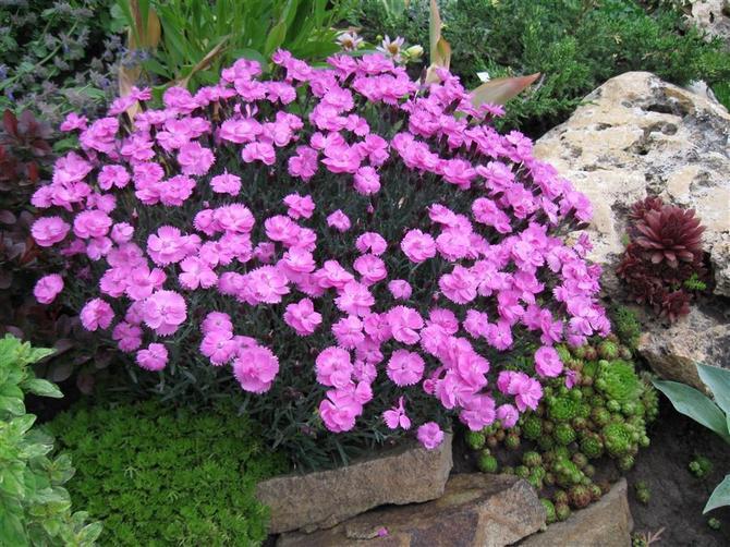 Выбор места для цветов и цветовой гаммы растений