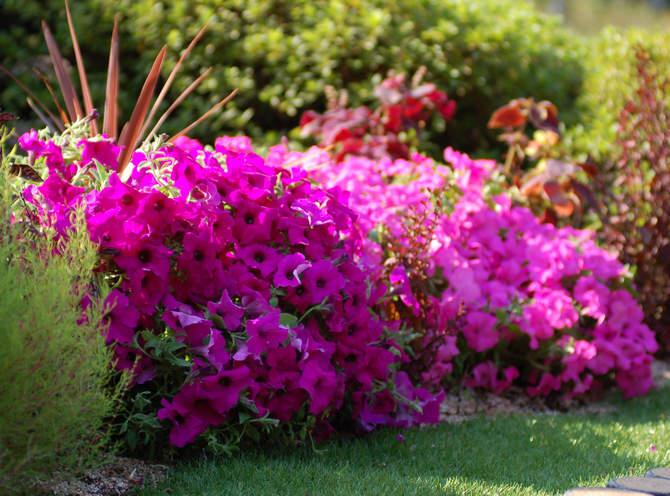 Низкорослые однолетние цветущие растения