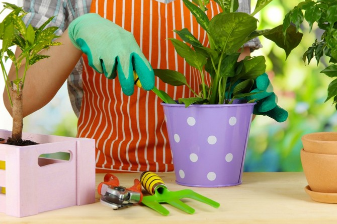 Пересадка комнатных растений и цветов: главные правила и советы