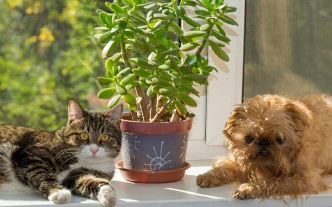 Советы, как защитить комнатные растения от животных