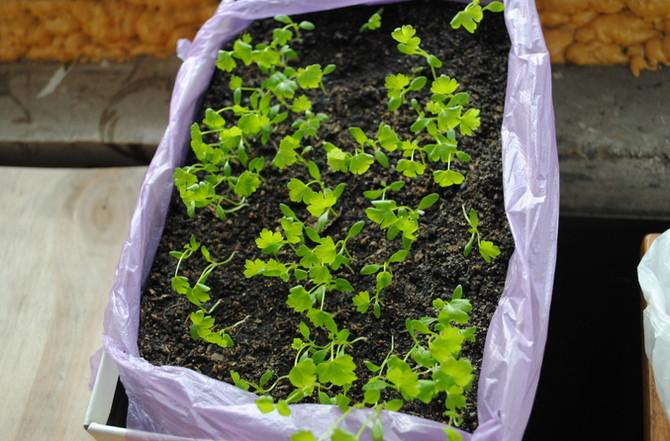 Основные этапы процесса посадки семян на рассаду