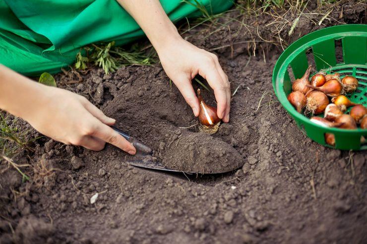 Выбор места и требования к почве