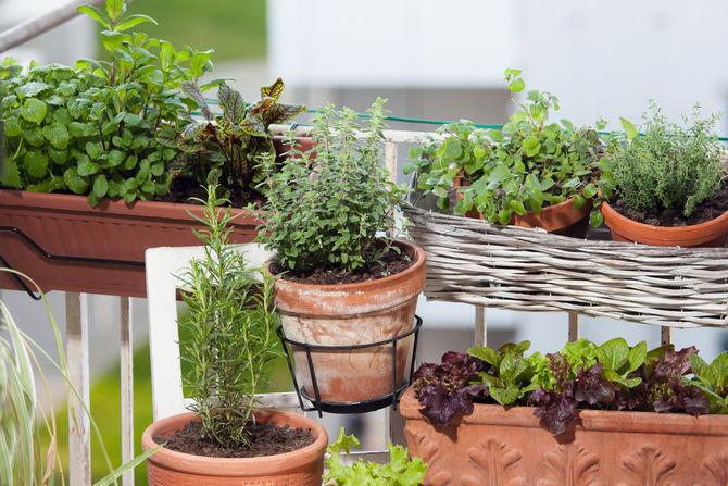 Как определить наступление периода покоя у растений